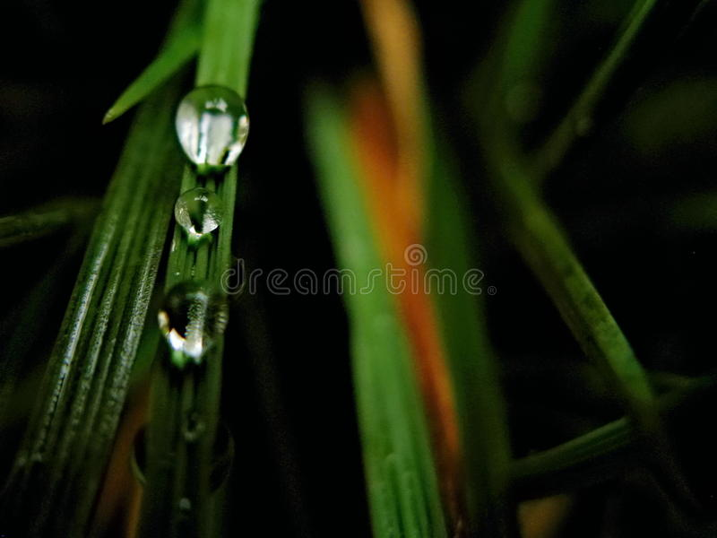 Rain drops stock photos