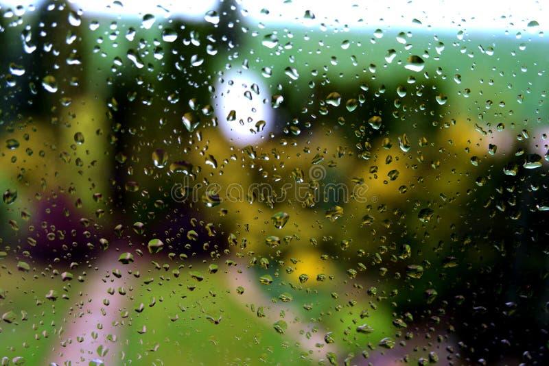 Rain drops on a garden window after the rain.  stock image