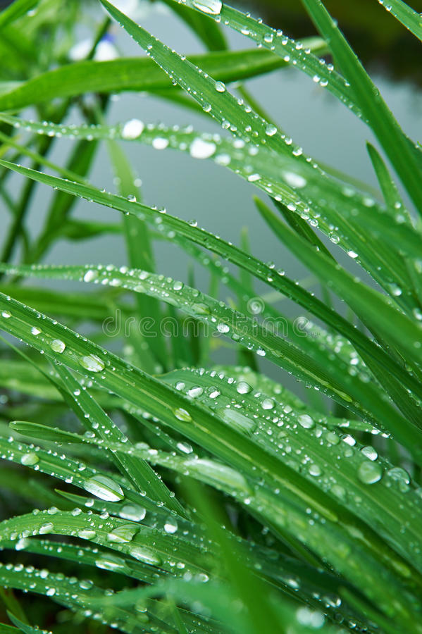 Rain drops on the grass royalty free stock images