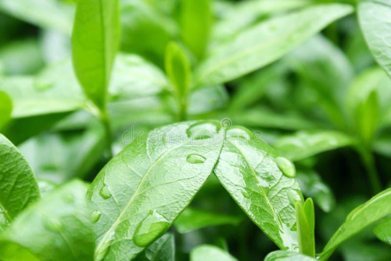 Rain drops on a green leaf. S stock photos