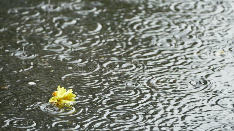 Rain falling on a puddle II. royalty free stock photo