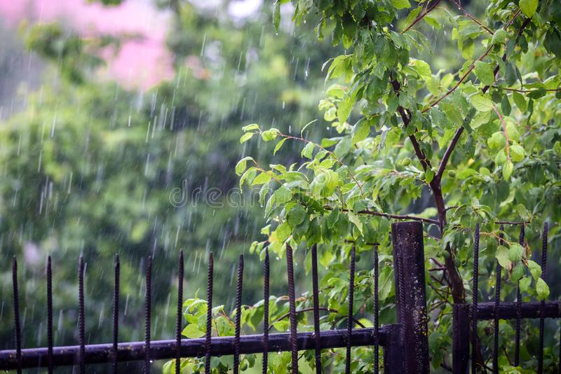 The rain falls on the branches of plants.  royalty free stock images