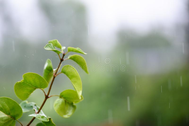 The rain falls on the branches of plants.  royalty free stock photos