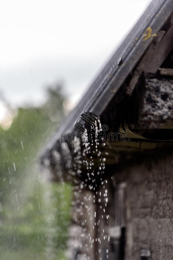 The rain falls on the branches of plants. Storm rain drips down from the roof royalty free stock photo