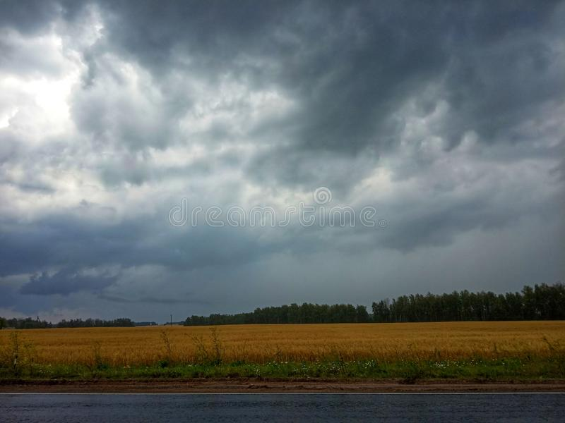 Rain in fields royalty free stock images