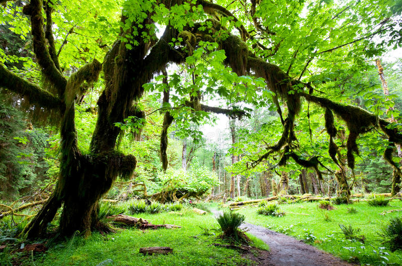 Download Rain forest stock photo. Image of redwood, forest, grow - 14861790