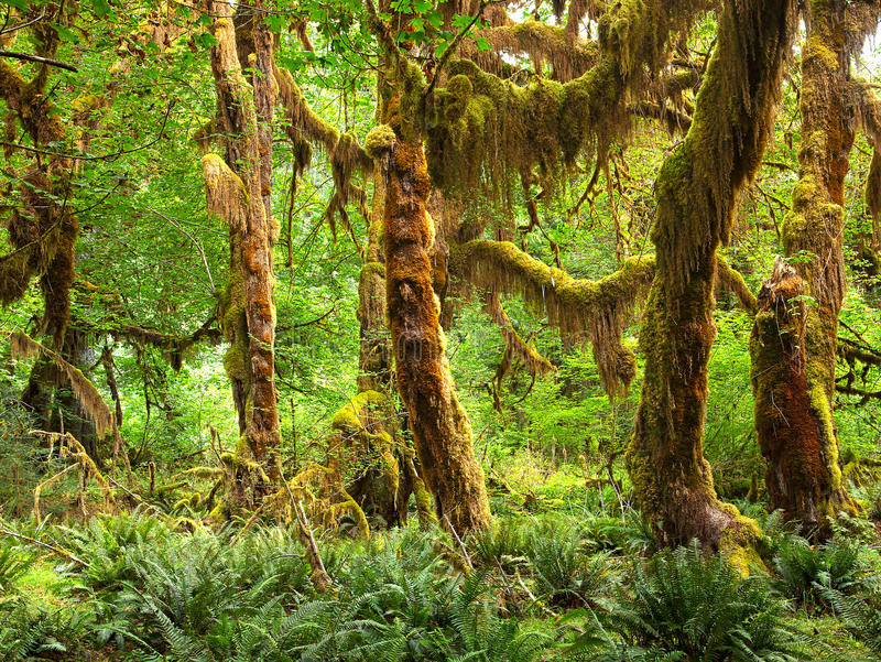 Rain Forest royalty free stock photography