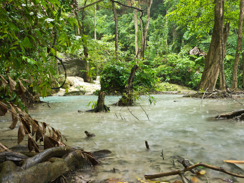 Download Rain forest stock image. Image of raining, forest, environment - 26267175