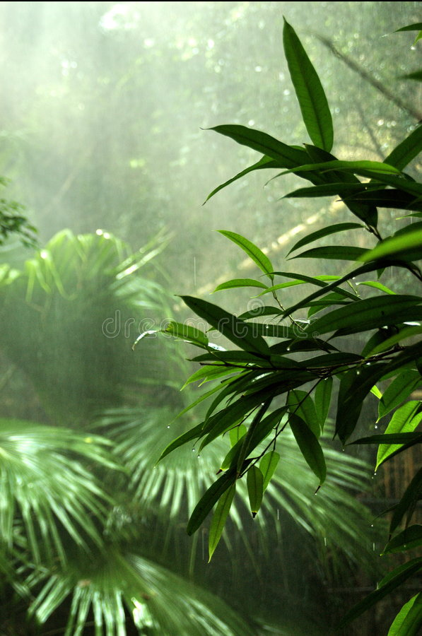 Rainforest stock photo