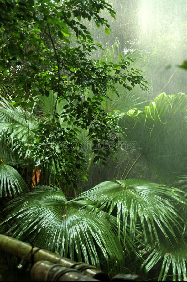 Download Rainforest stock image. Image of nature, trickle, undergrowth - 3598975