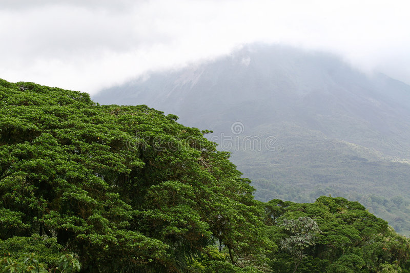 Rain forest royalty free stock images