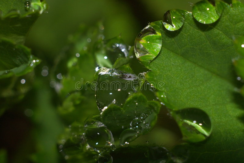 Rain in forest. On spring stock photography