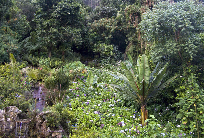 Download A rain forest in Amazonas stock image. Image of vegetation - 20318929