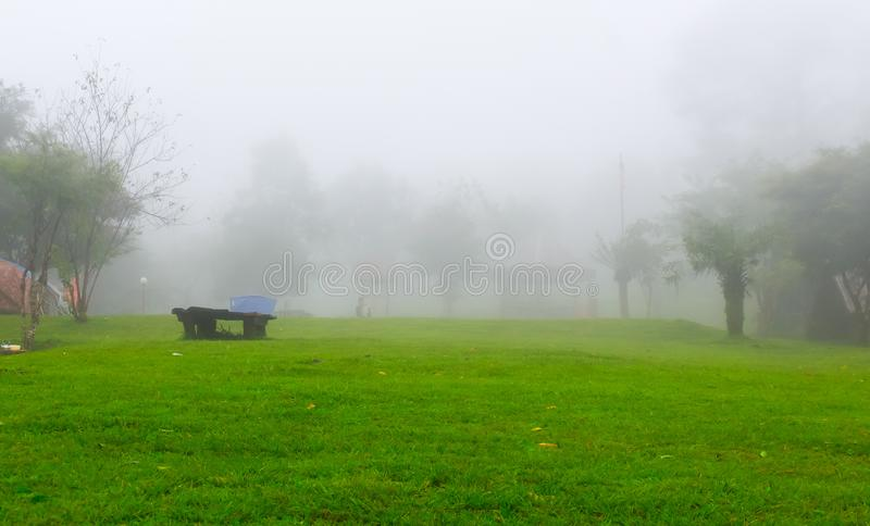 Rain forest beautiful nature Fresh air royalty free stock photography
