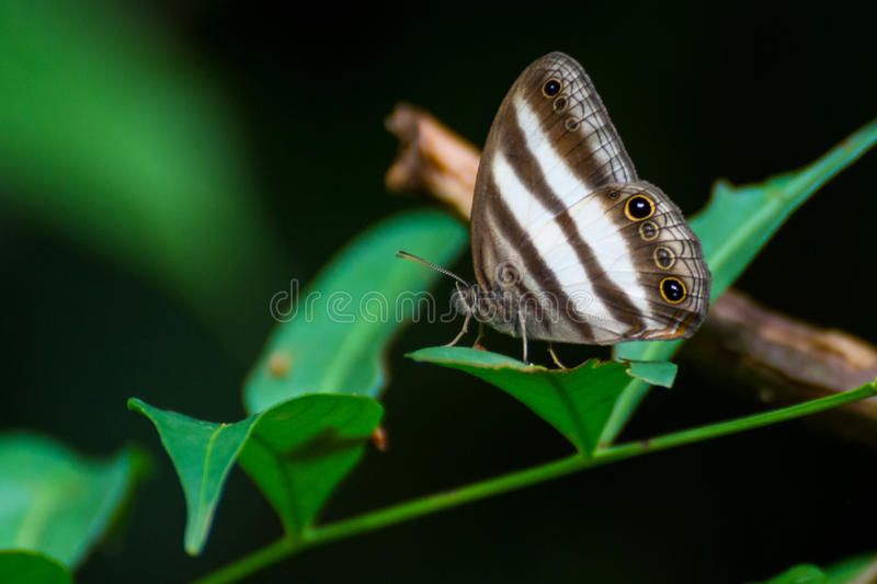 Rain forest butterfly royalty free stock images