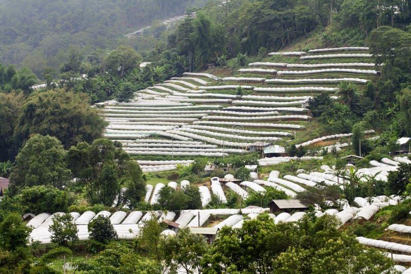 Download Rain Forest Destruction In Thailand Stock Image - Image: 25077079