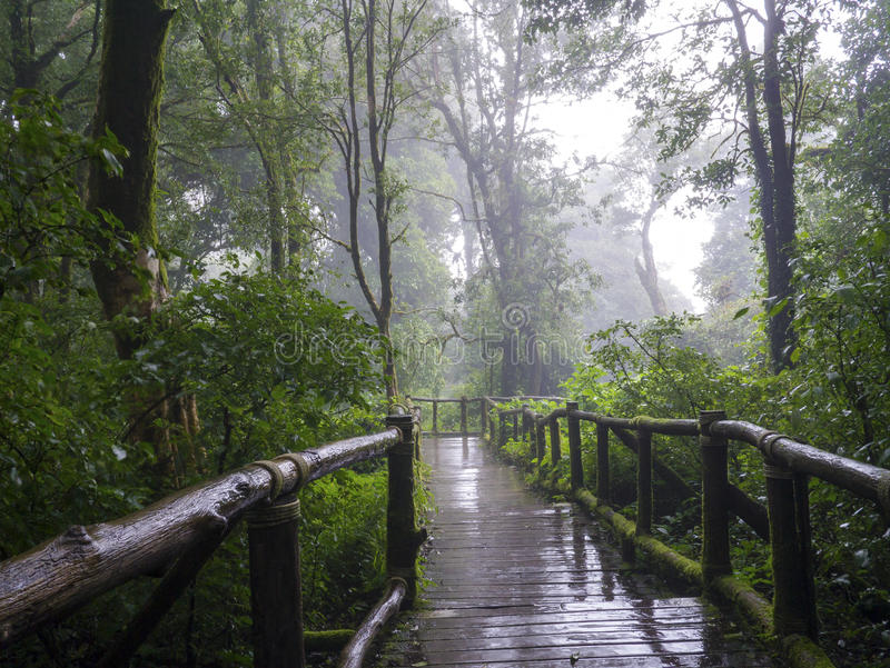 Rain forest at Doi intanon Chiang Mai royalty free stock image
