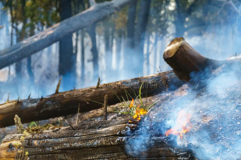 After rain forest fire disaster is burning caused by humans royalty free stock images