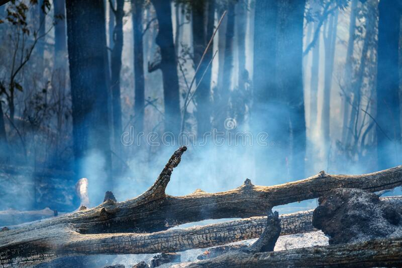 After rain forest fire disaster is burning caused by humans royalty free stock image
