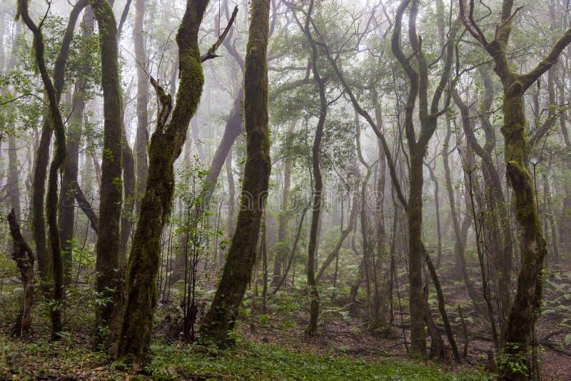 Rain forest at Garajonay park. La Gomera, Canary Islands. royalty free stock photos