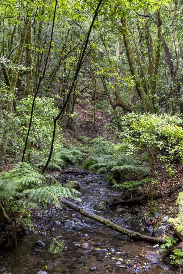 Rain forest at Garajonay park. La Gomera, Canary Islands. Spain stock photos