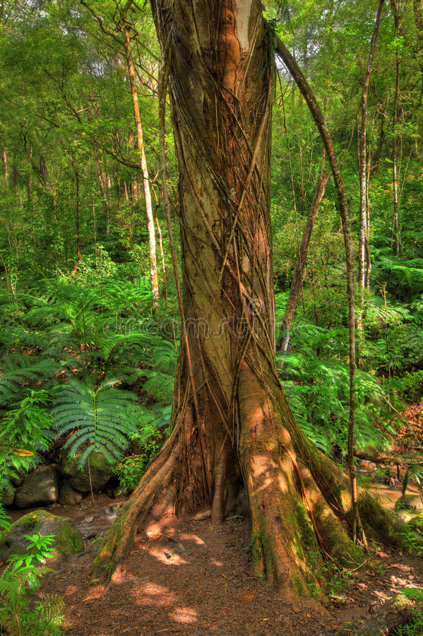 Rain forest - HDR photo