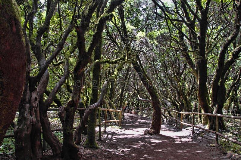 The rain-forest in La Gomera, Canary, Spain stock photo