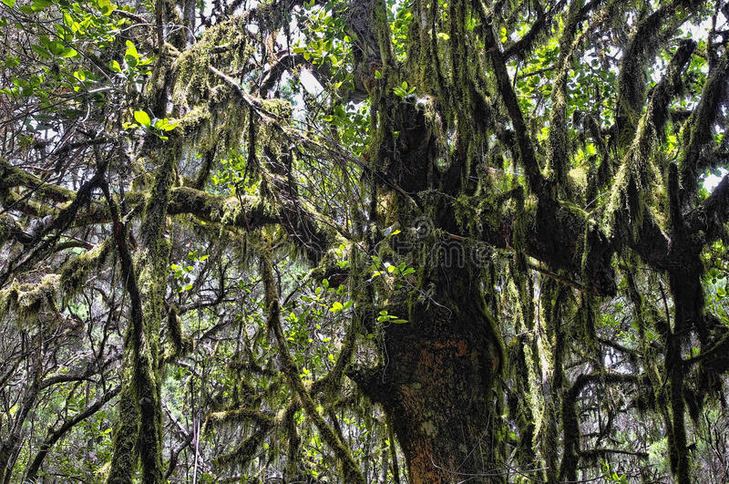 The rain-forest in La Gomera, Canary, Spain royalty free stock image