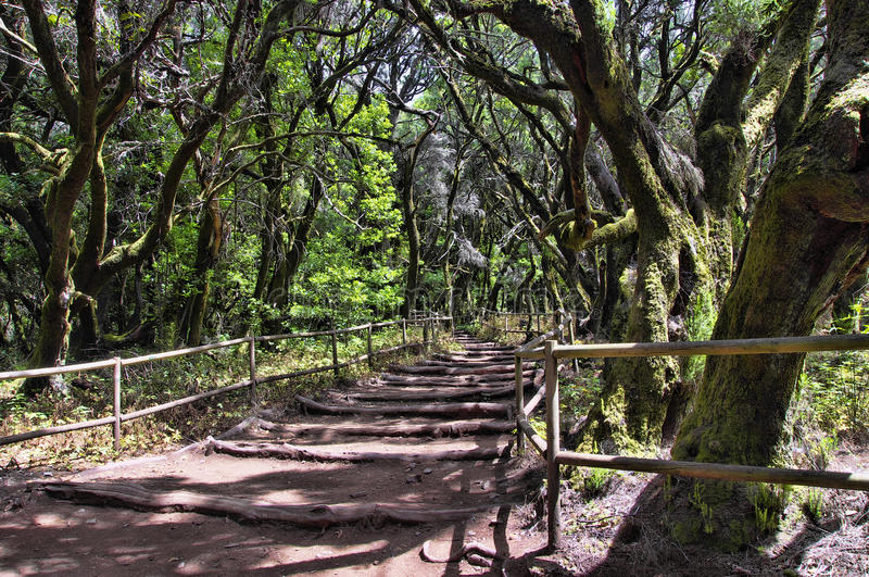 The rain-forest in La Gomera, Canary, Spain stock images