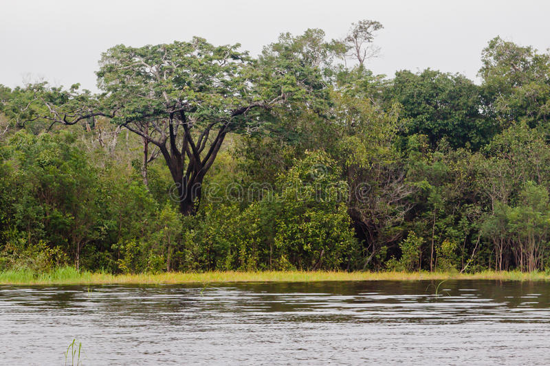 Download Rain Forest Manaus stock image. Image of north, america - 24364493