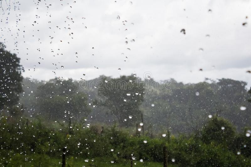Rain in the forest, the natural background and texture. Blurred abstract image royalty free stock photo