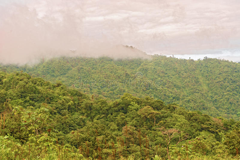 Rain forest, Panama stock images