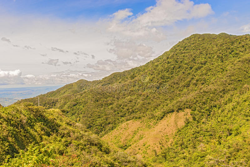 Rain forest, Panama stock photos