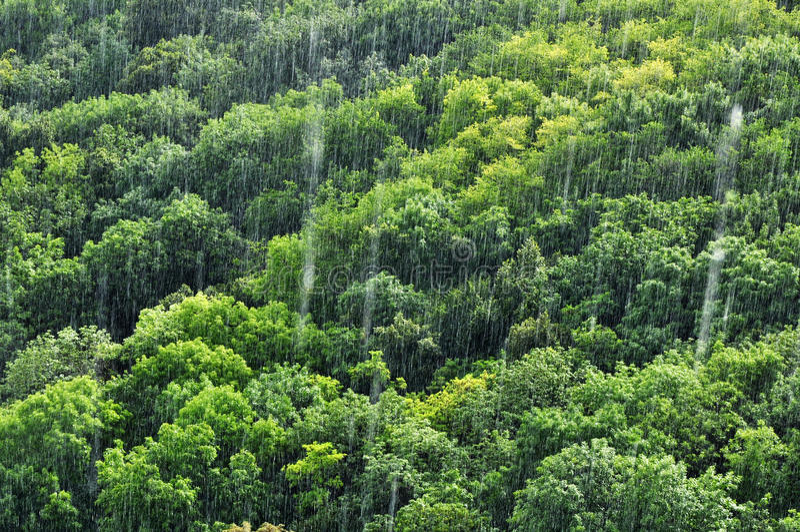 Rain forest rainfall royalty free stock photo