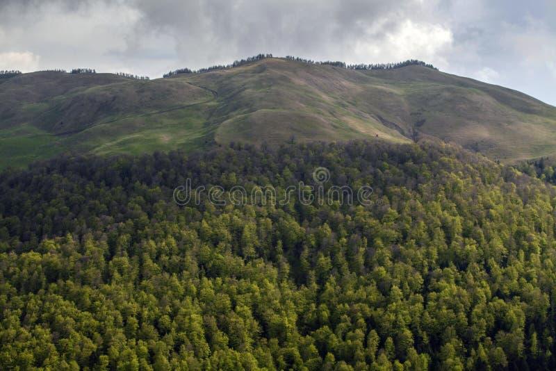 Rain forest stock image
