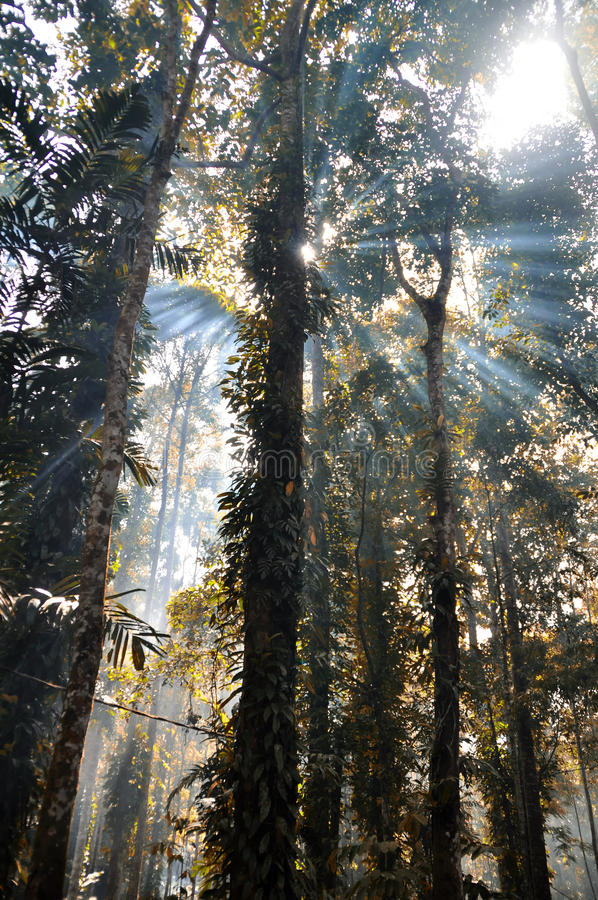 Free Rain Forest Sun Rise Stock Images - 18158174