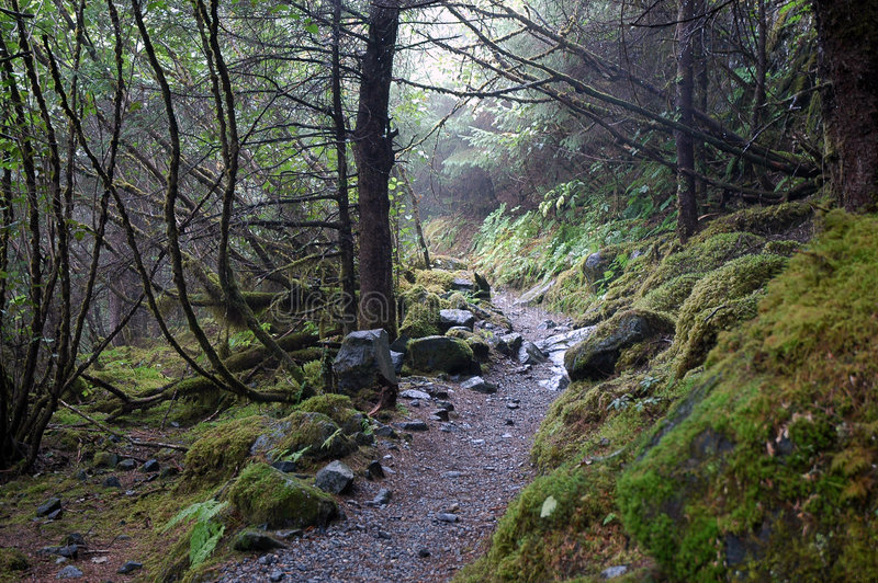 Rain Forest Trail royalty free stock images