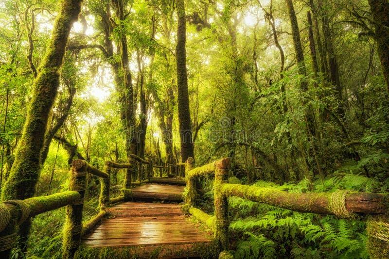 Rain forest walk way, Ang Ka Nature Trail stock images