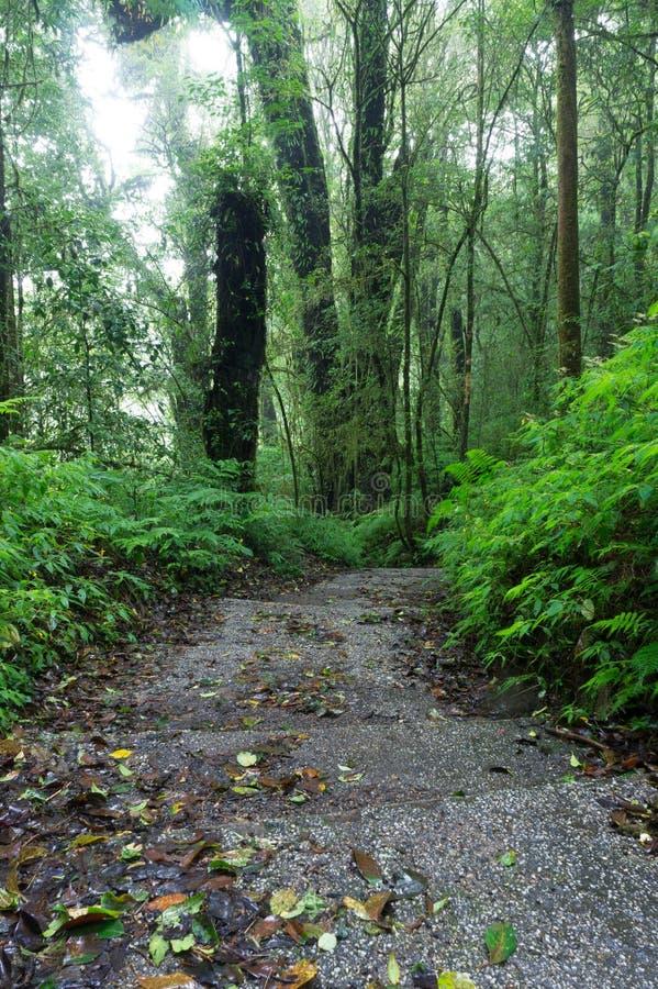 Rain Forest Walkway royalty free stock photo