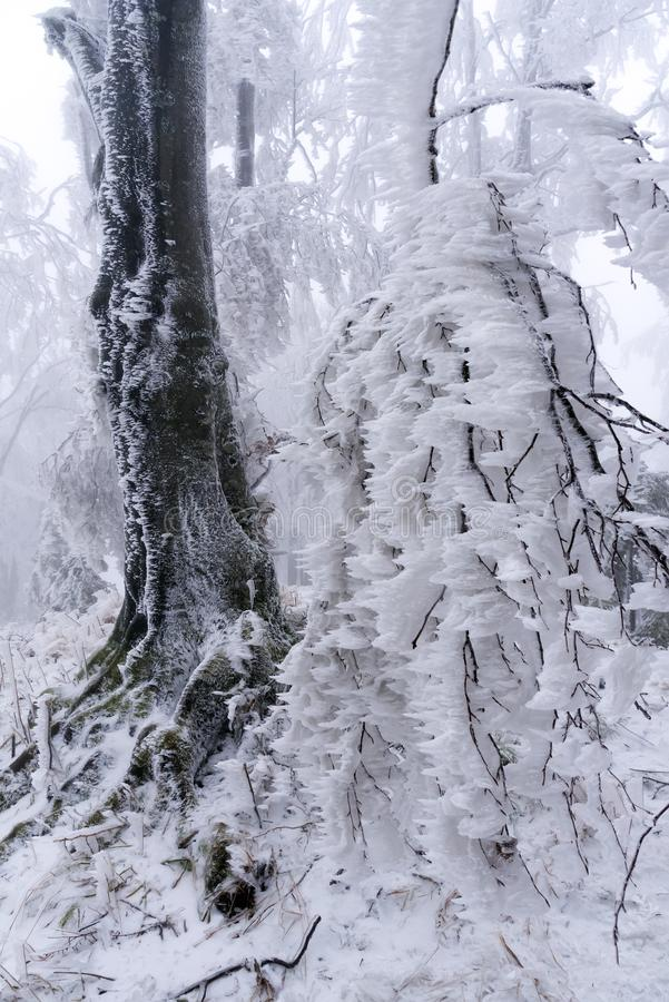 Frozen tree royalty free stock photography