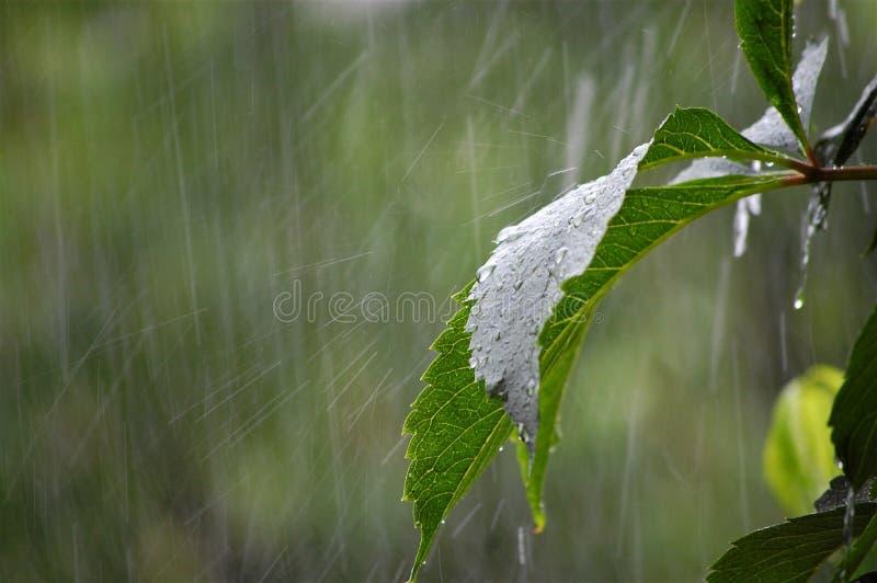 Rain in the garden royalty free stock photography