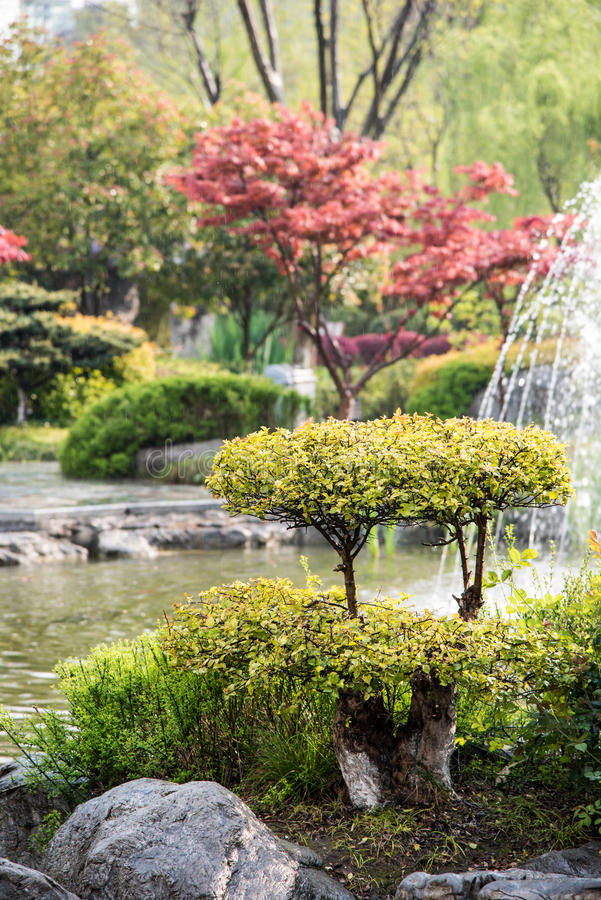 The rain garden stock photography