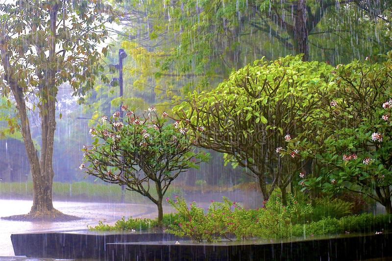 Rain in Gardens by the Bay - Botanic gardens in Singapore royalty free stock photos