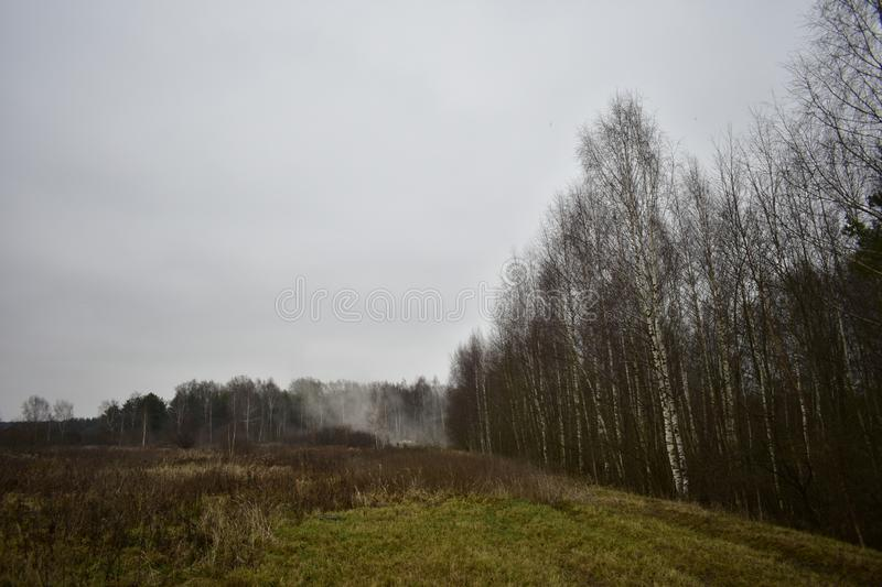 Rain green grass field road slender rows of tall birch trees forest fog spreading. Cloud the cloudy. Sky royalty free stock photography