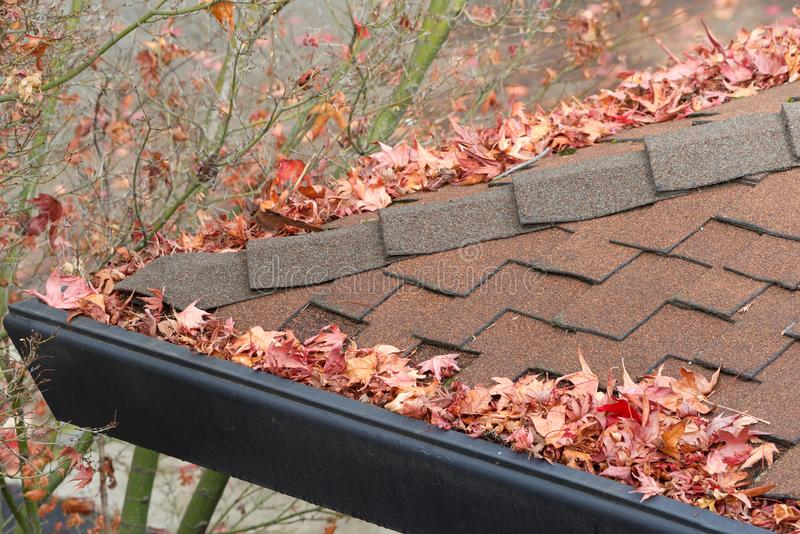 Rain gutters on roof clogged with leaves and debri, fire hazard. Rain gutters on roof without gutter guards, clogged with leaves, sticks and debris from trees stock photos
