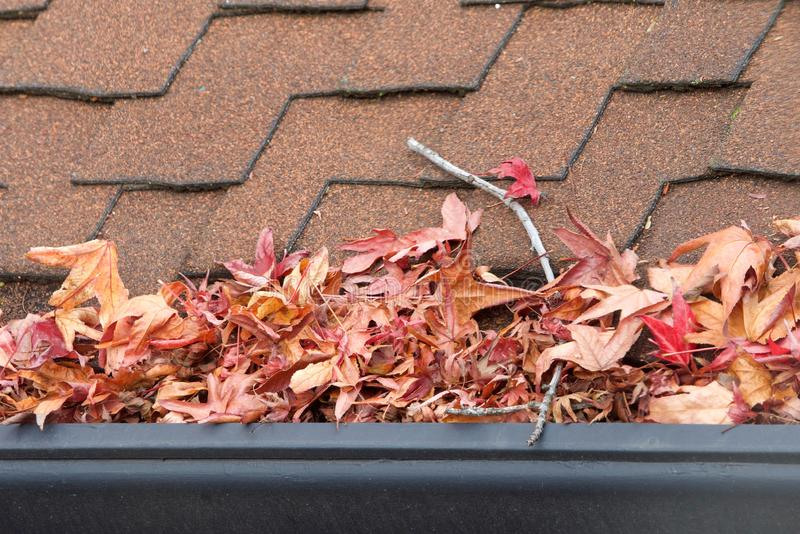 Close up on rain gutter clogged with leaves and debris. Rain gutters on roof without gutter guards, clogged with leaves, sticks and debris from trees. Increased stock images