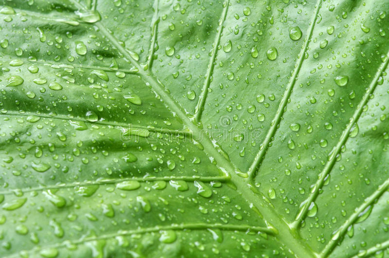 Rain and leaf stock photography
