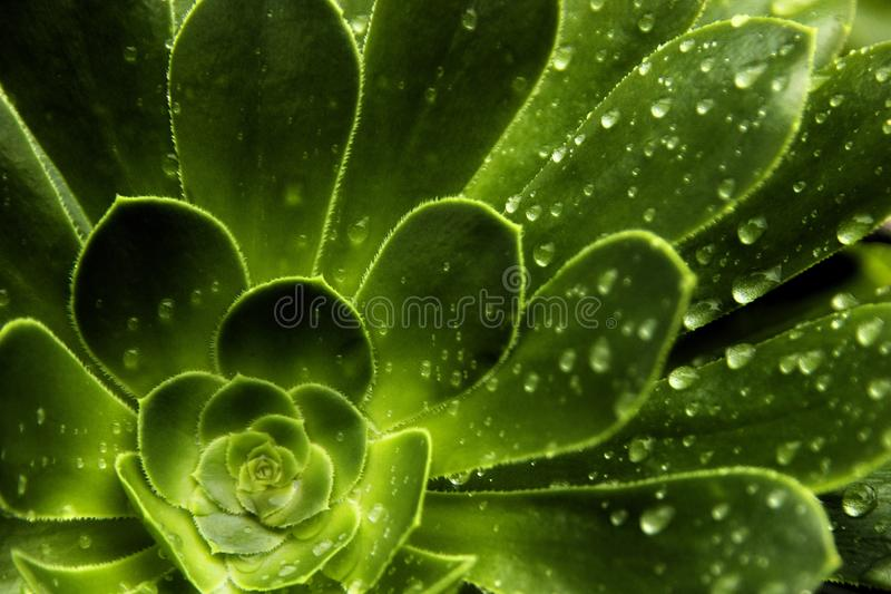 Rain Leaf Pattern. Details of leaves of a flower after rain in pattern stock images
