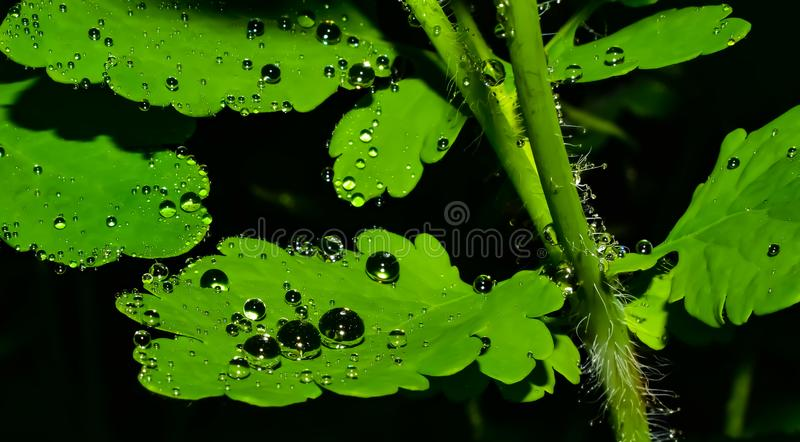 After rain royalty free stock photo