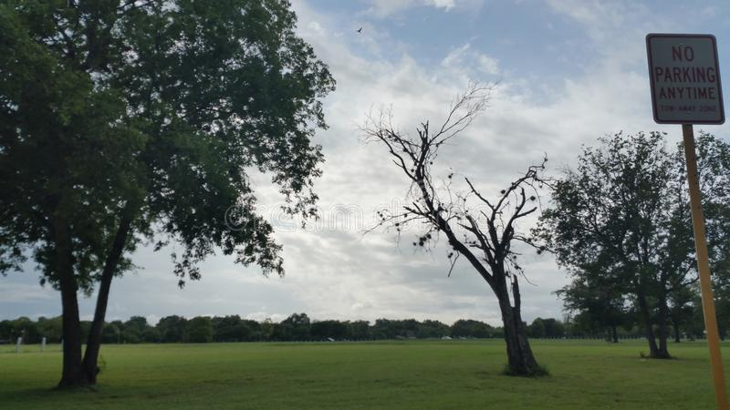 Rain in the park royalty free stock photo